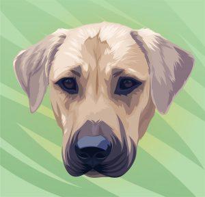 puppyleader