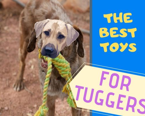 THE BEST TOYS FOR TUGGERS
