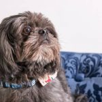 What is the Best Dog Food for Shih Tzus with Allergies