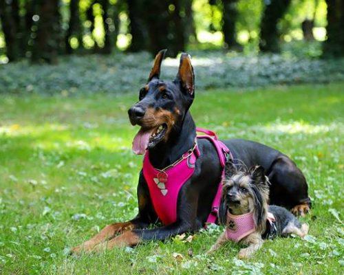 best dog harnesses for running