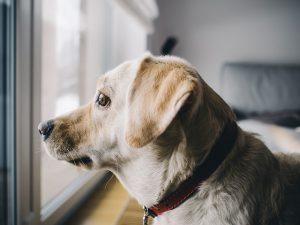 dog rehomed