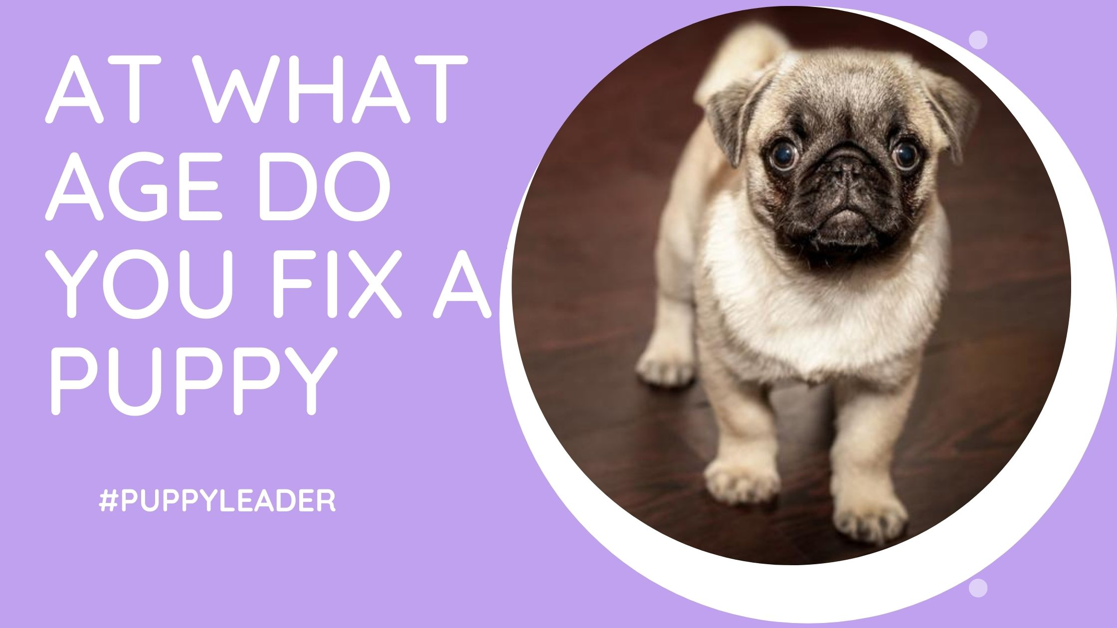 at what age do you fix a puppy