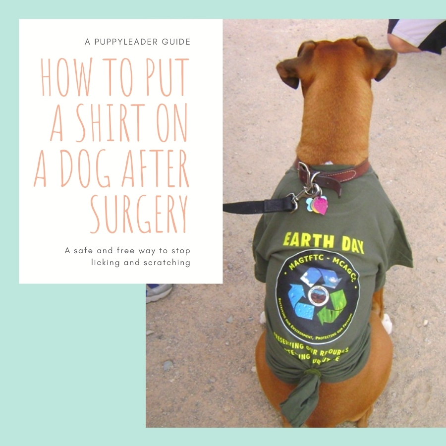 How To Put A Shirt On A Dog After Surgery