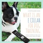 what is an e collar for dogs dog training