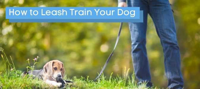 How to Leash Train Your Dog