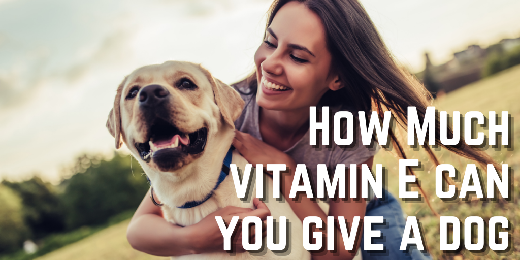 How Much Vitamin E To Give A Dog