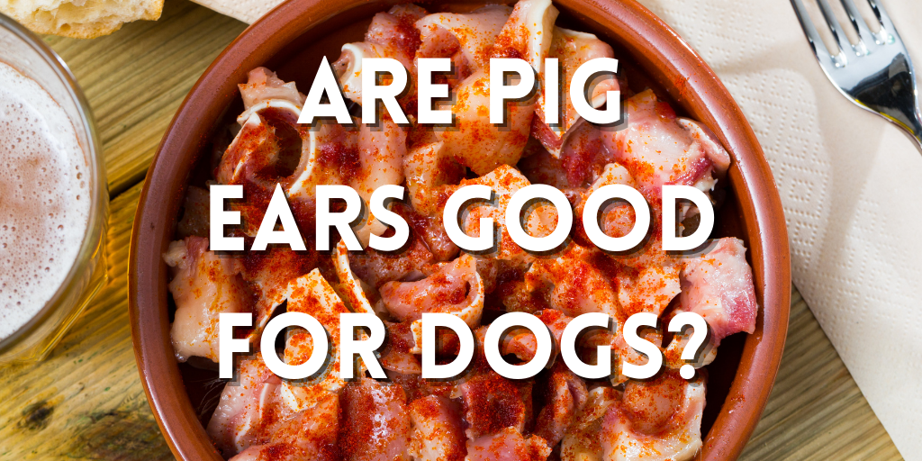 are pig ears good for dogs