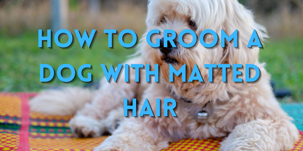 How To Groom A Dog With Matted Hair