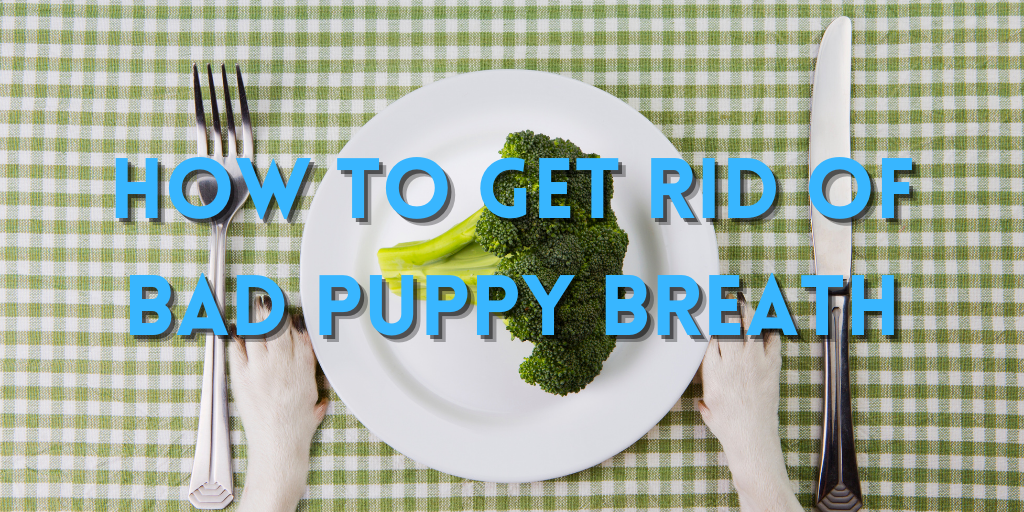 How to Get Rid of Bad Puppy Breath